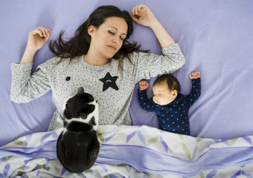 5 ideas para celebrar el Día del Gato. FOTO GETTY IMAGES